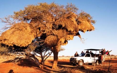 Du lich Namibia tieng goi noi hoang da 5