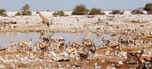 Du lich Namibia tieng goi noi hoang da 6