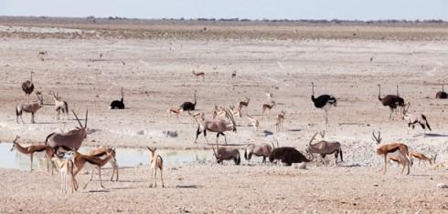 Du lich Namibia tieng goi noi hoang da 8