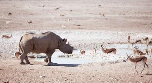 Du lich Namibia tieng goi noi hoang da 9