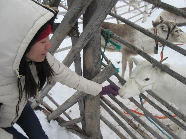 Du lịch Lapland, Phần Lan, quê hương ông già Noel - 05