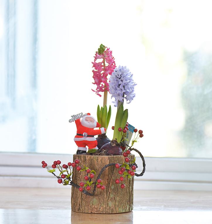 Giáng sinh ấm áp cùng sắc hoa Dalat Hasfarm - 02