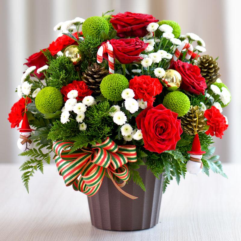 Giáng sinh ấm áp cùng sắc hoa Dalat Hasfarm - 01