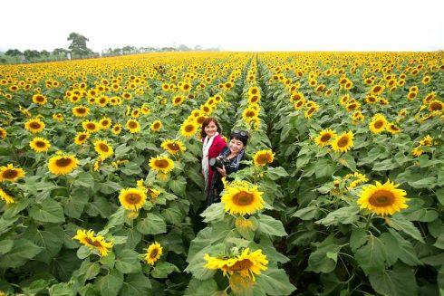 Men theo đường mòn Hồ Chí Minh, vượt qua khoảng 250km, bạn sẽ có mặt tại cánh đồng hoa nở vàng óng ánh và cùng ghi lại những khoảnh khắc xuân thì rạng rỡ.