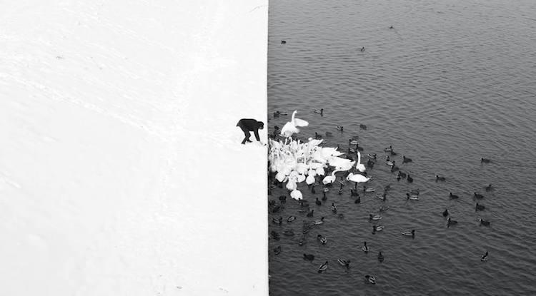 Những bức ảnh đẹp nhất Siena International Photo Awards 2016