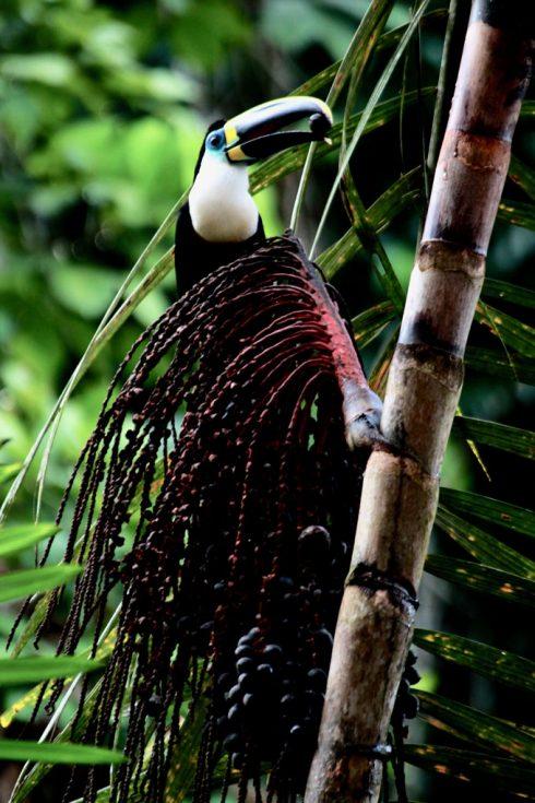 Du lịch Amazon Bàn tay che chở 11