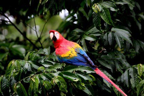 Du lịch Amazon Bàn tay che chở 3
