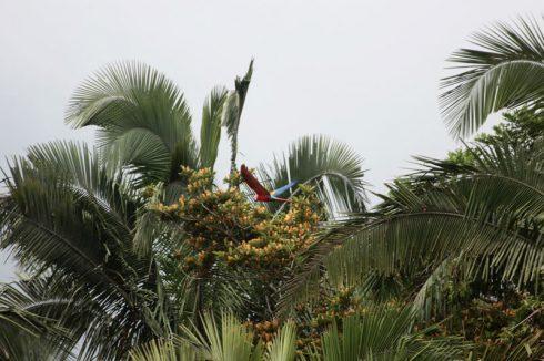 Du lịch Amazon Bàn tay che chở 4
