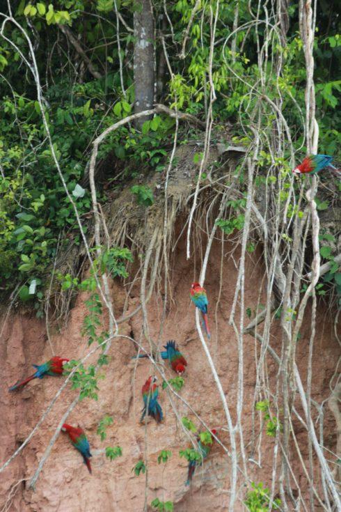 Du lịch Amazon Bàn tay che chở 5