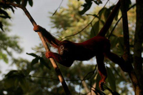 Du lịch Amazon Bàn tay che chở 6