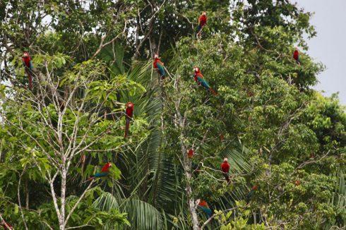 Du lịch Amazon Bàn tay che chở 8
