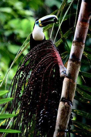 Du lịch Amazon, khu dự trữ sinh quyển cho loài người