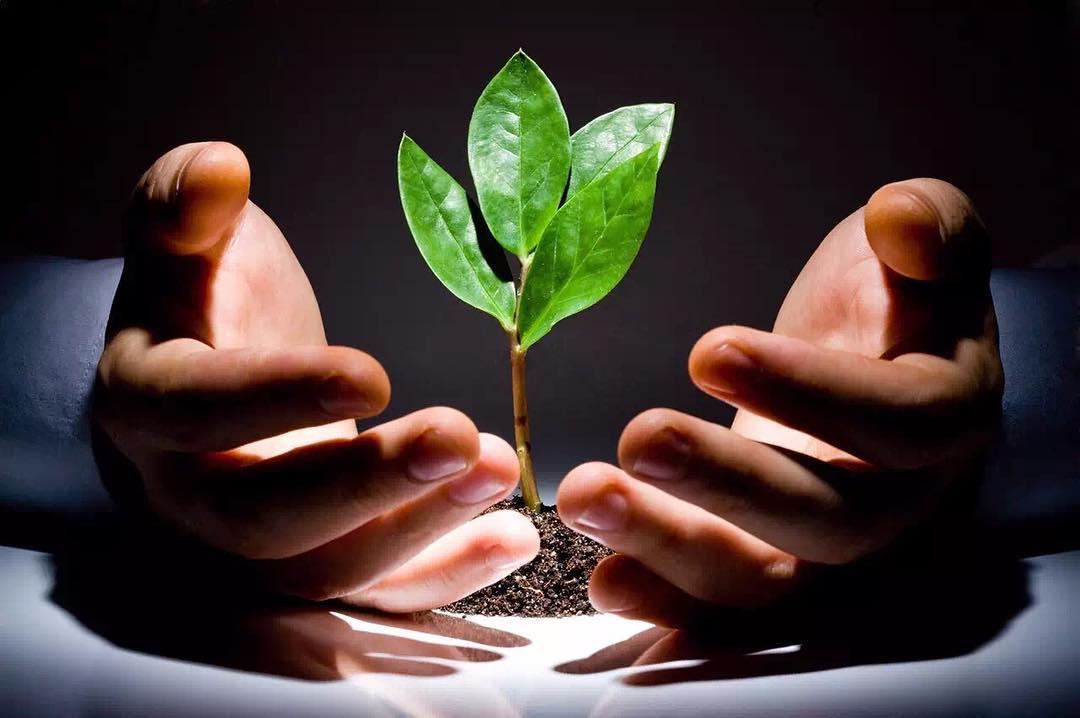 luật nhân quả - gieo nhân nào gặt quả nấy - elle vietnam