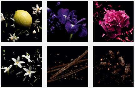 13 cột mốc đáng nhớ trong lịch sử thương hiệu nước hoa Guerlain ELLE VN