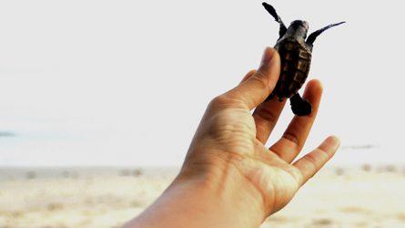 Du lịch Malaysia - Đến thăm thiên đường của Rùa biển