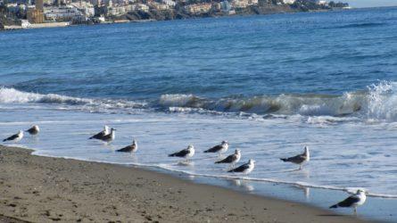 Du lịch Tây Ban Nha thăm biển Địa Trung Hải