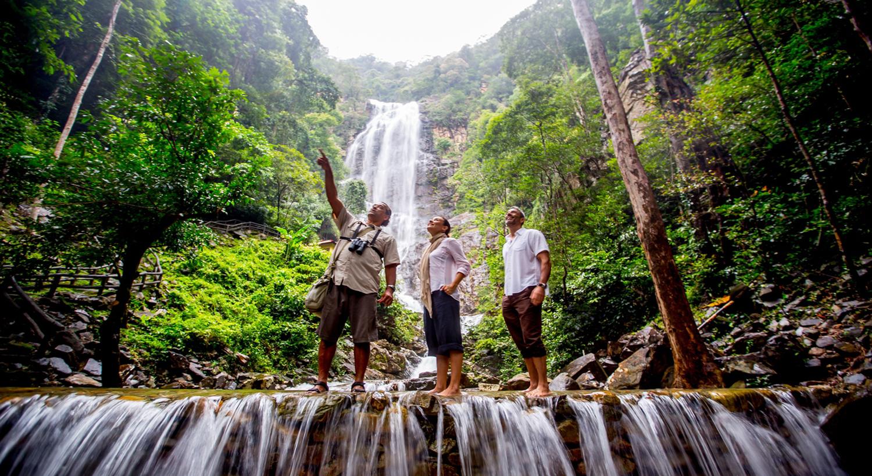 Bạn có thể book một tour nhỏ đi thăm thú các loài động vật hoang dã như khỉ, đại bàng, chim mỏ sừng, hay tham gia trò chơi thể thao dưới nước.