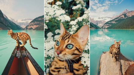 Ngắm nhìn những hình ảnh đẹp du lịch của cô mèo Suki