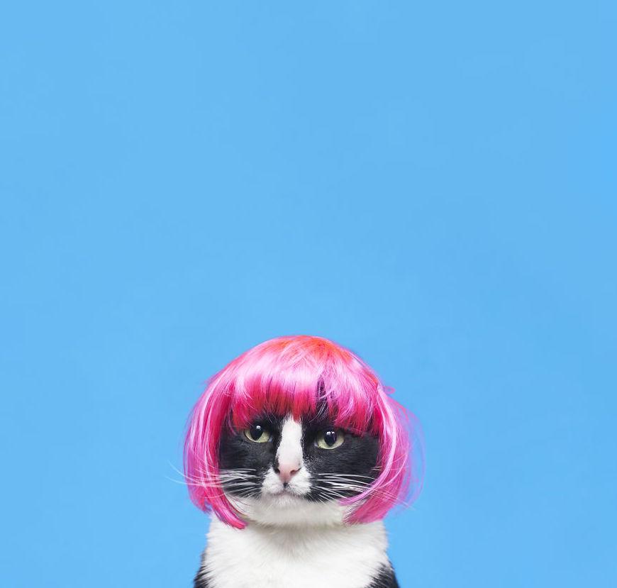 Gặp gỡ công chúa mèo Cheeto được yêu thích trên cộng đồng mạng