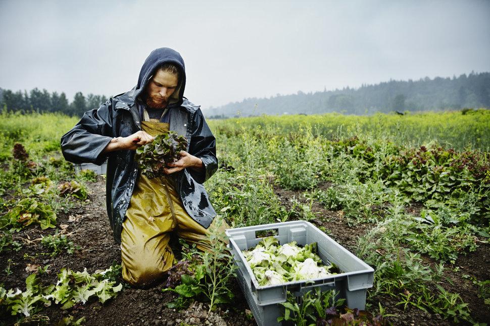 nông trại bền vững