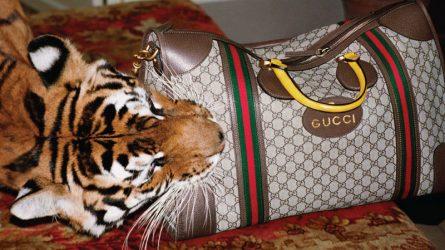 Nhà mốt Gucci với tôn chỉ đạo đức nhằm bảo vệ môi trường sống loài người
