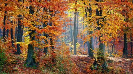 Chiêm ngưỡng cảnh đẹp mùa Thu vòng quanh thế giới