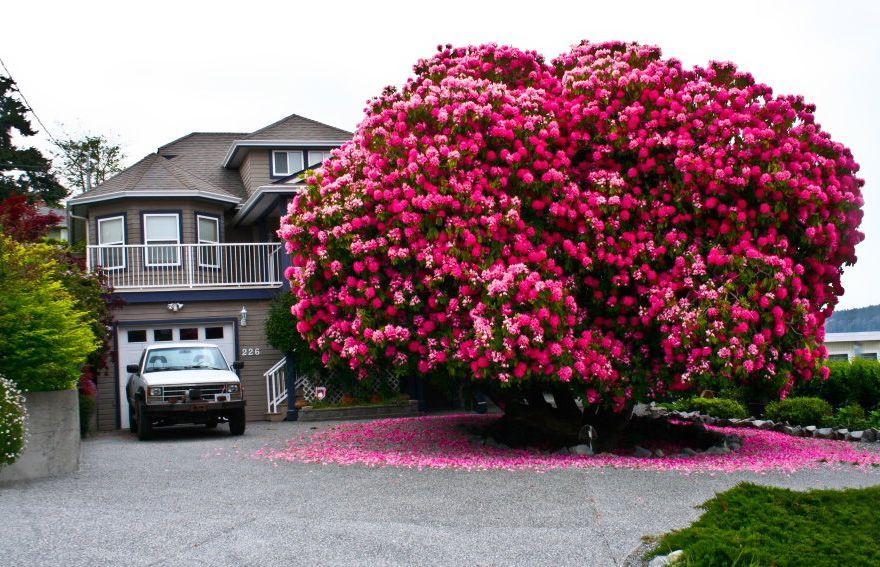 loài cây đẹp