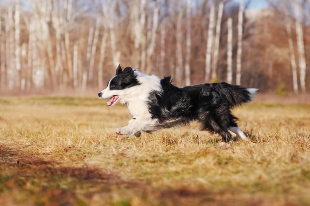 năng lượng loài chó