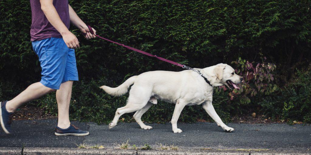 tâm lý loài chó