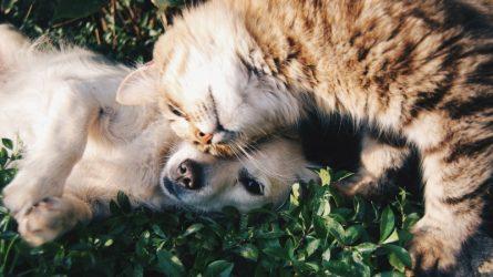 Xao xuyến với 20 thú nuôi nổi tiếng nhất trên Instagram