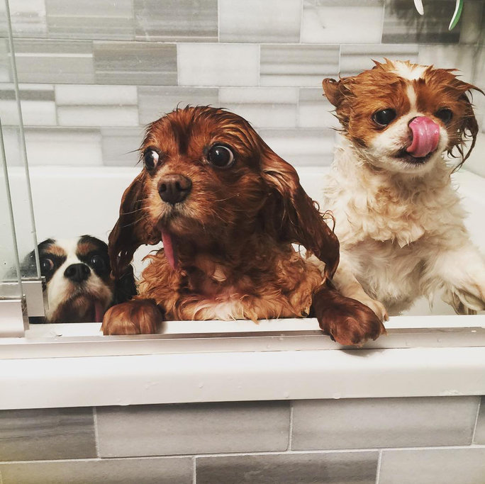 20 thú nuôi nổi tiếng instagram
