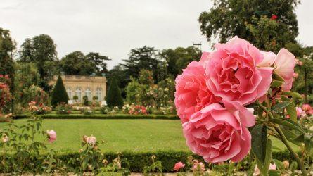 Du lịch Pháp: Vườn hồng Bagatelle, nhịp thở lãng mạn giữa Paris