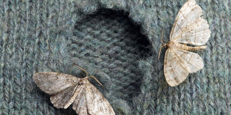 Những điều cần biết khi bảo quản và chăm sóc sản phẩm cashmere