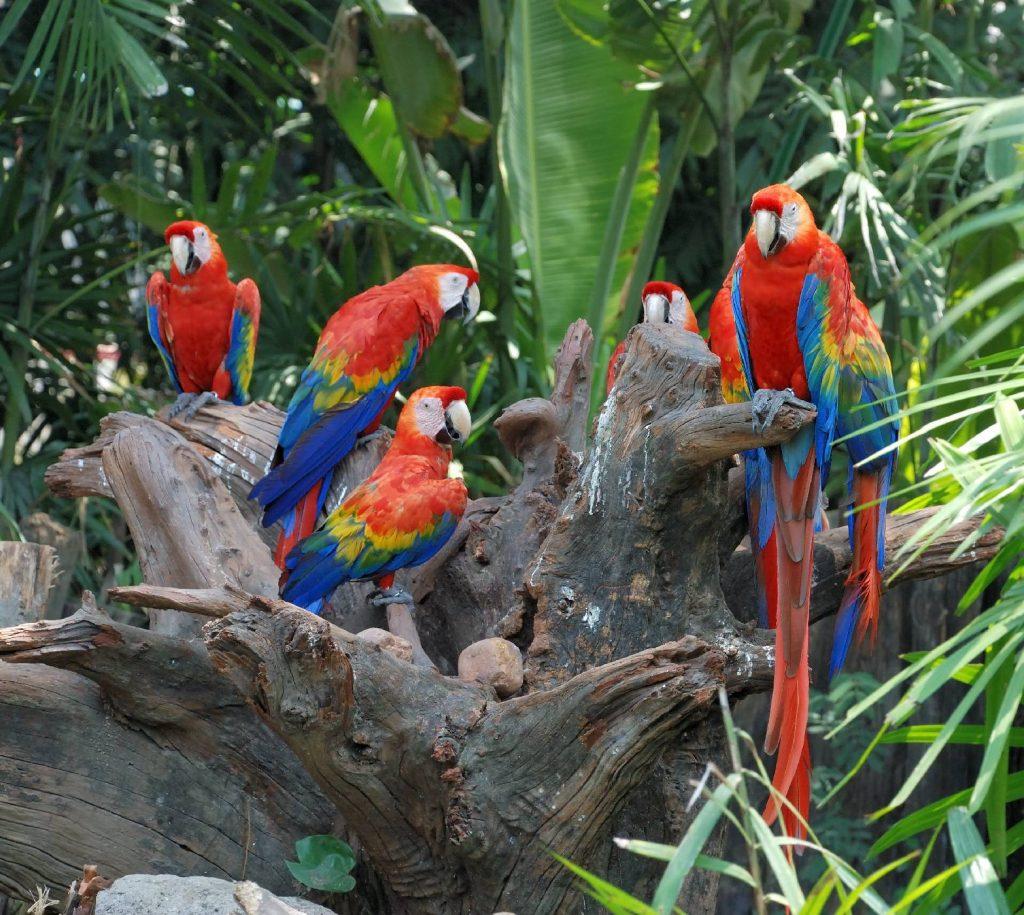 du lịch tết Costa Rica
