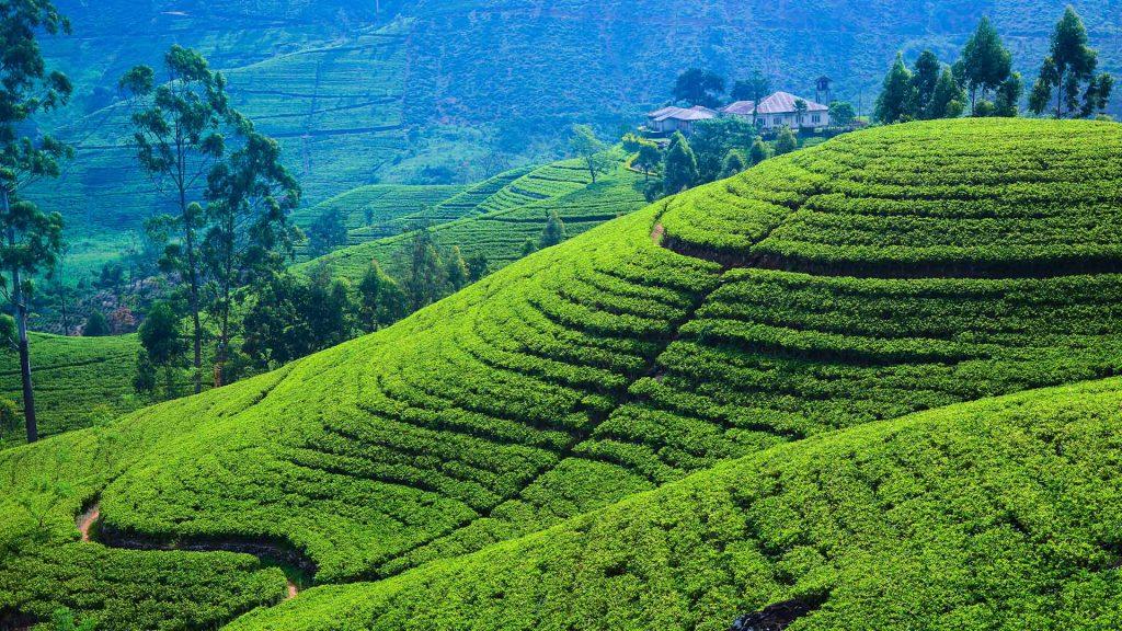 du lịch tết Sri Lanka