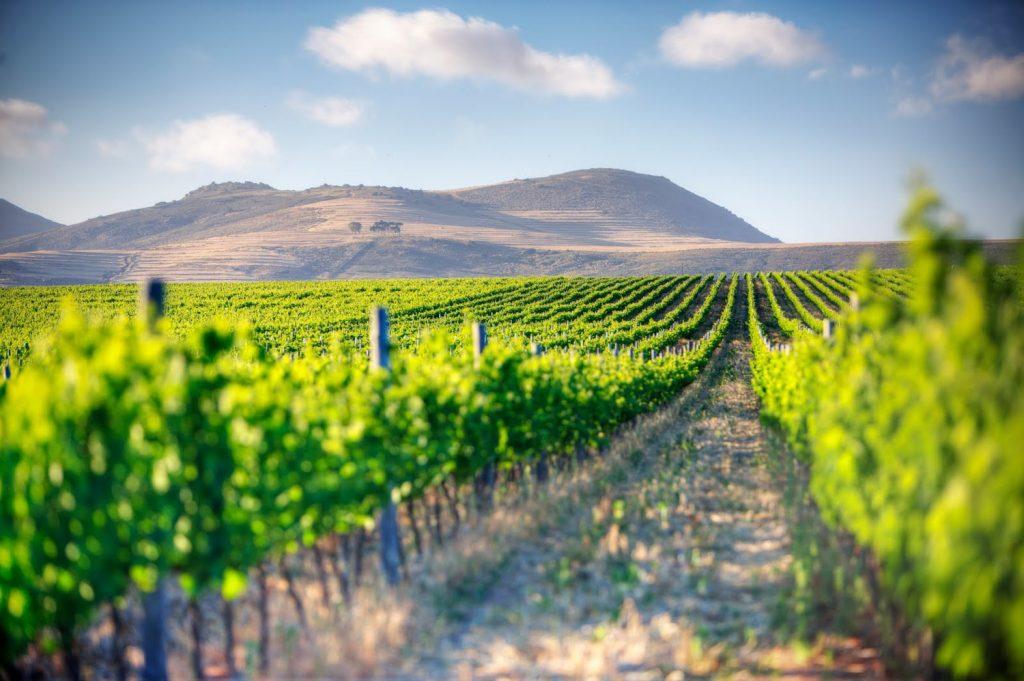du lịch tết Winelands