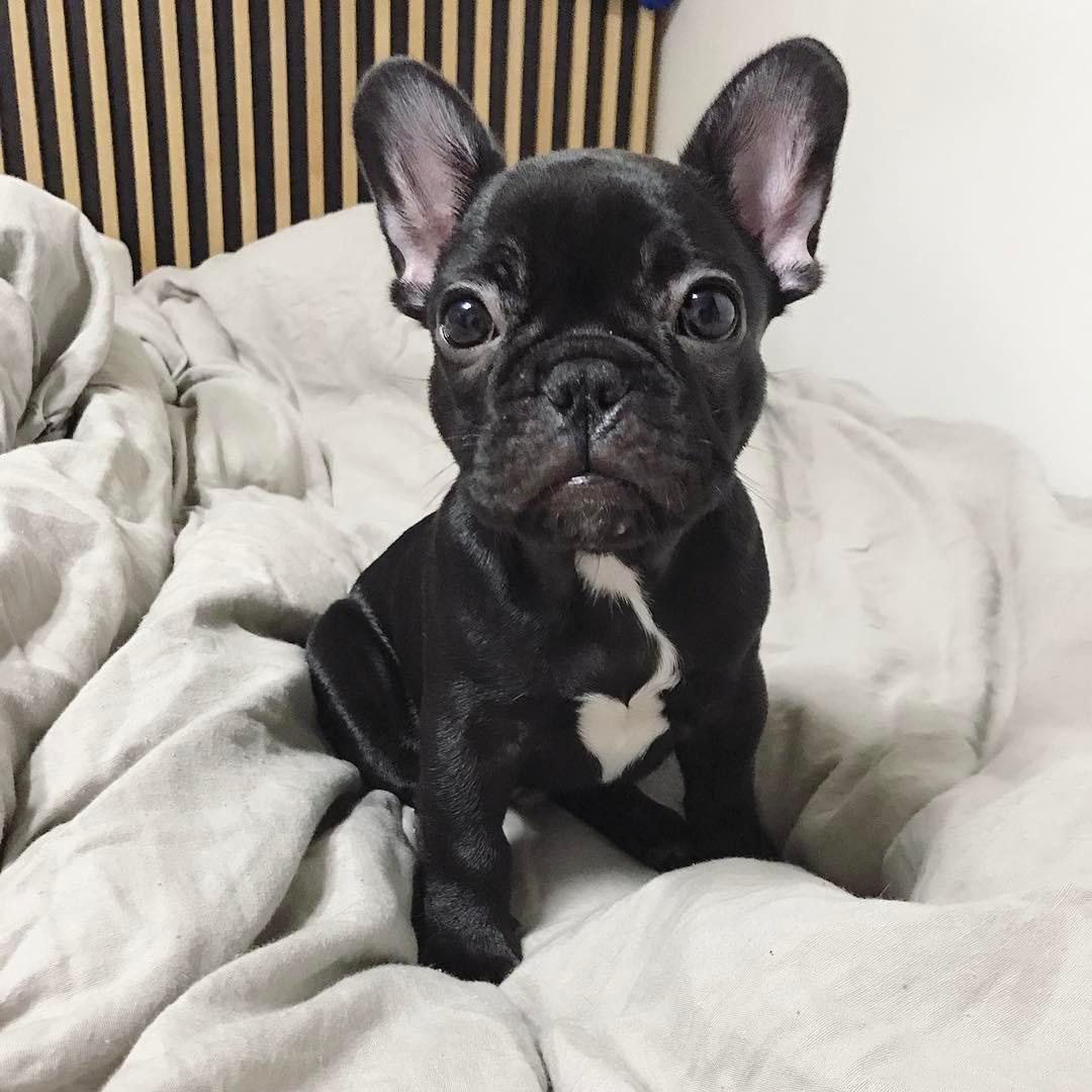 cún cưng 3