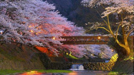 20 địa điểm tuyệt vời để ngắm hoa anh đào trên khắp thế giới
