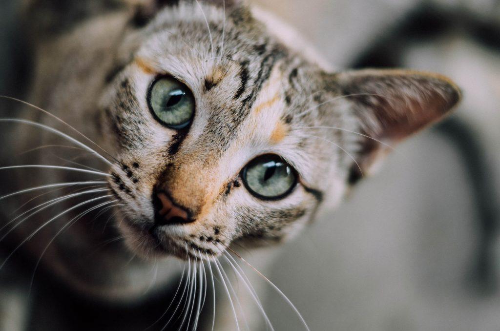 người yêu mèo 2