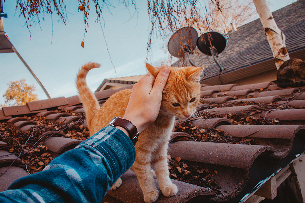 người yêu mèo 5