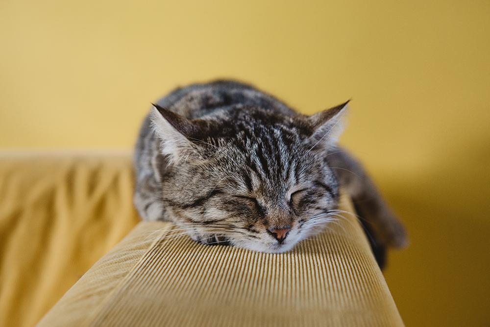 người yêu mèo 6