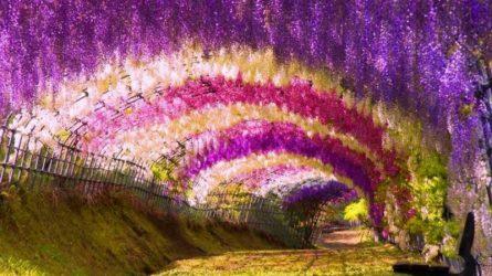 7 vườn hoa tuyệt đẹp nên ghé thăm vào mùa Xuân này
