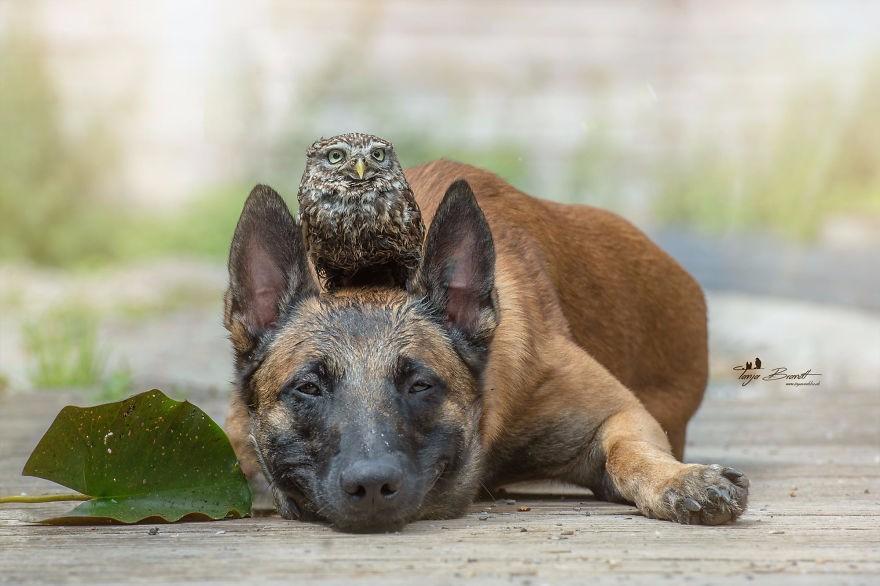 Tình bạn của chú chó Ingo 5