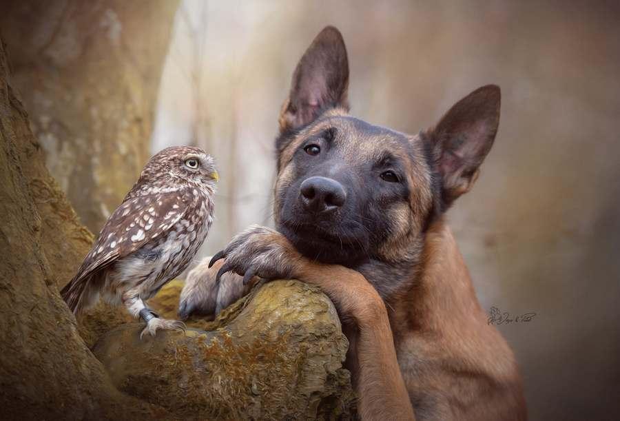 Tình bạn của chú chó Ingo 19