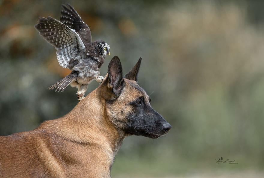 Tình bạn của chú chó Ingo 20