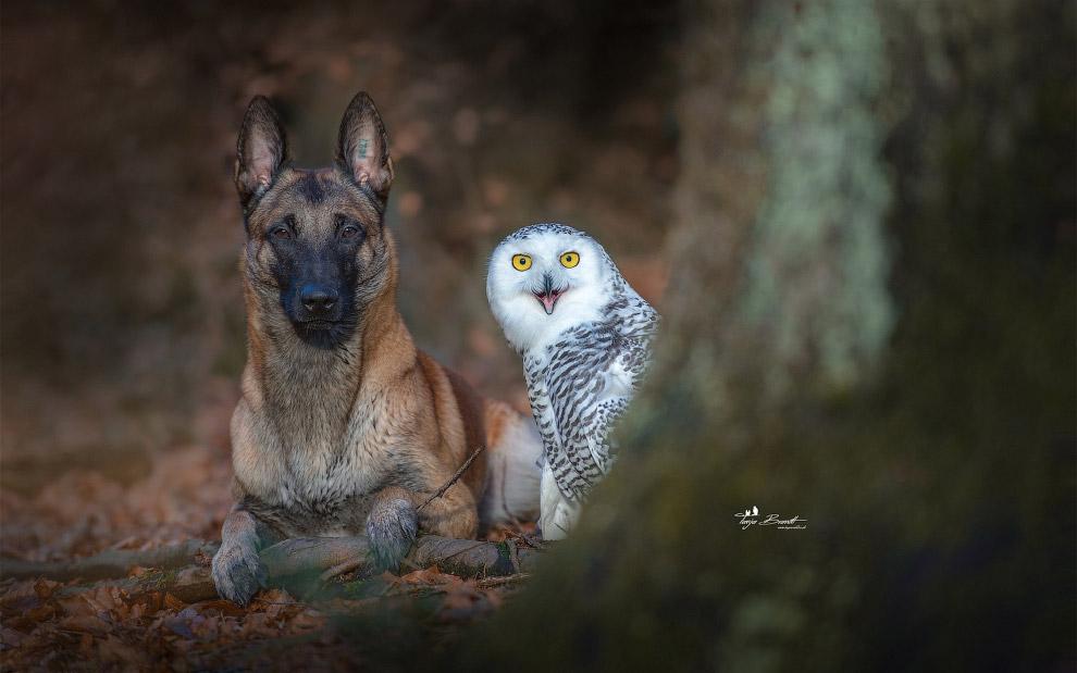 Tình bạn của chú chó Ingo 29
