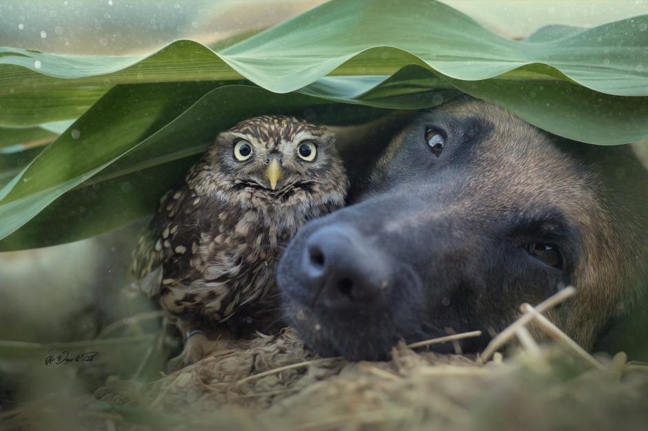 Tình bạn của chú chó Ingo 2