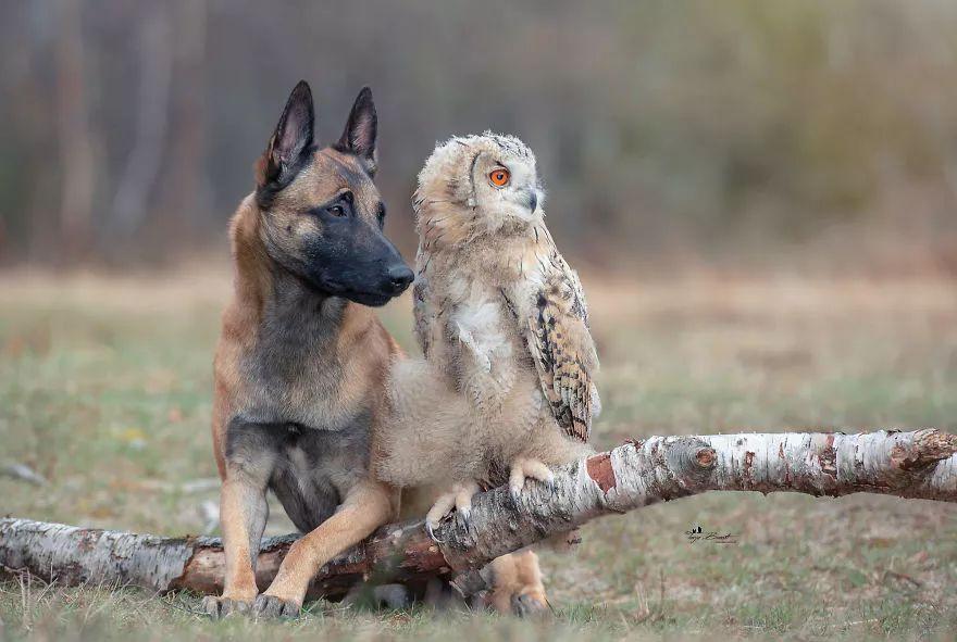Tình bạn của chú chó Ingo 30