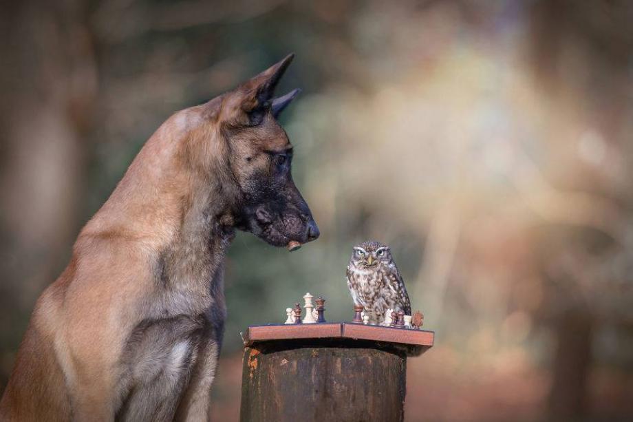 Tình bạn của chú chó Ingo 3
