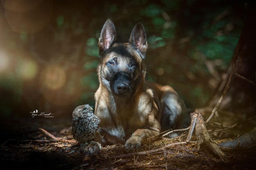 Tình bạn của chú chó Ingo 21